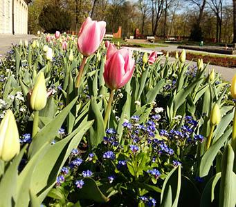 CARPET_OF_FLOWERS_fot_Julia_Dobrzanska