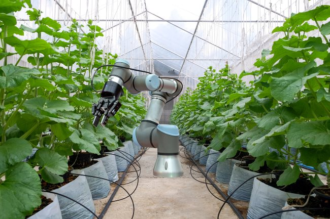 Smart robot installed inside the greenhouse. For the care and help farmers harvest the melon, smart farm on farming 4.0 concept.