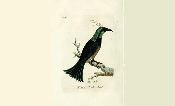 ptak zielonopiory