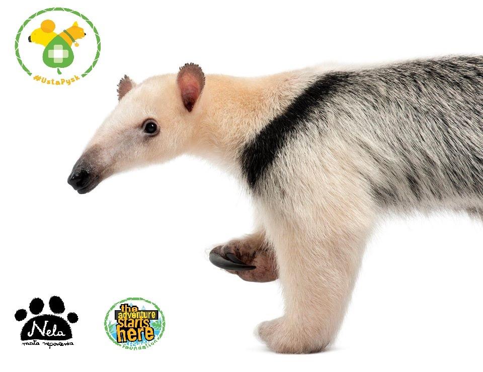 Szkolenie pierwsza pomoc dla dzikich zwierząt