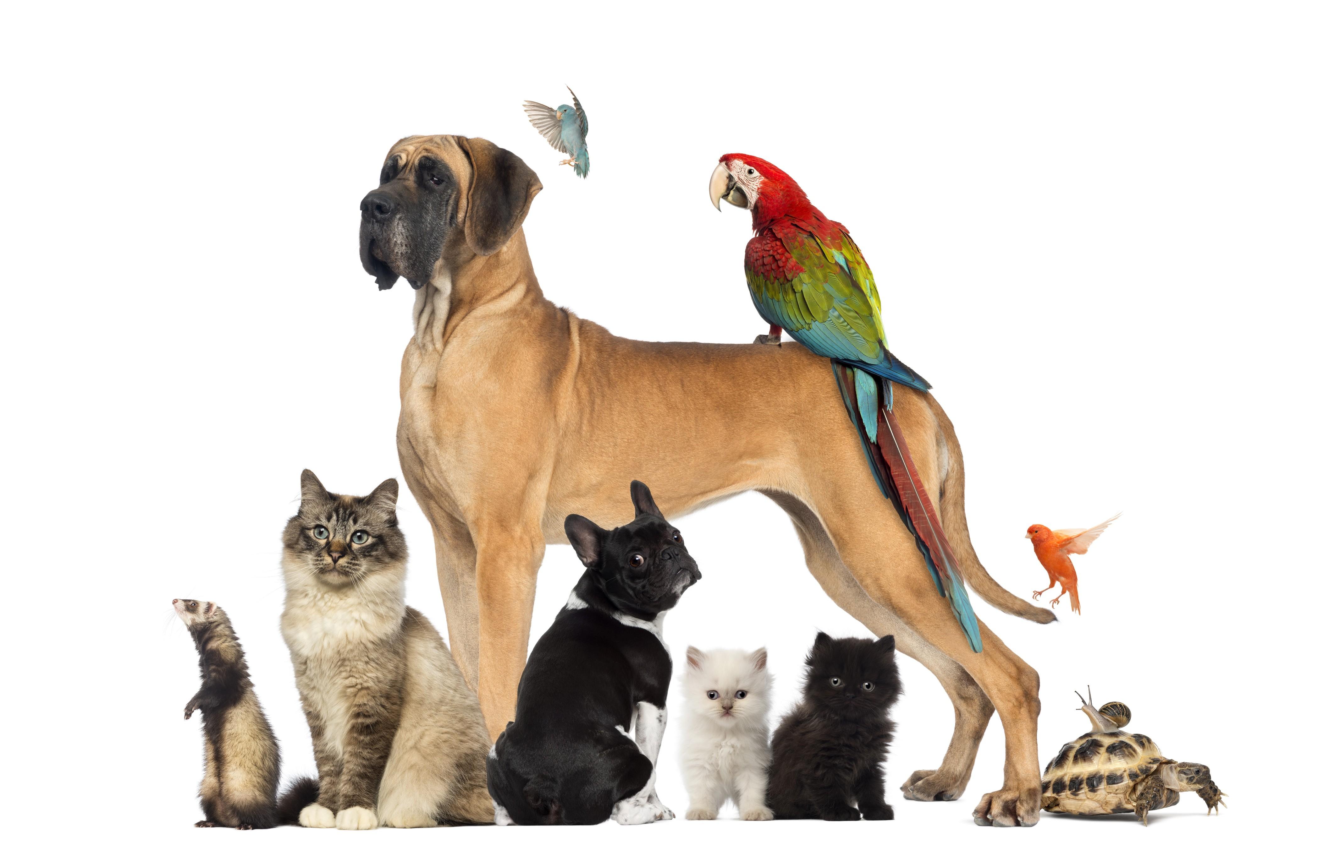 Piąty Wymiar_Zwierzęta są wśród nas