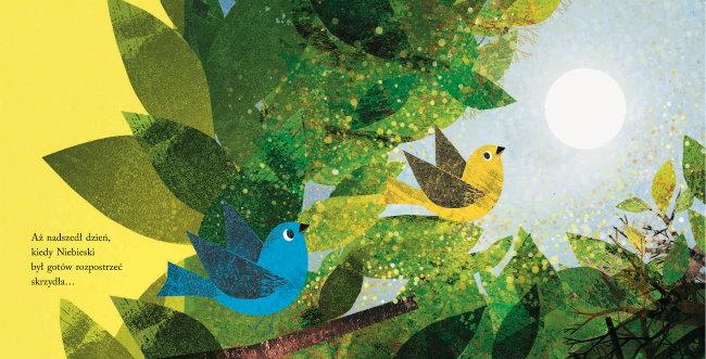 Niebieski i Zolty - rozkladowka